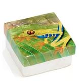 CAPIZ BOX TREE FROG