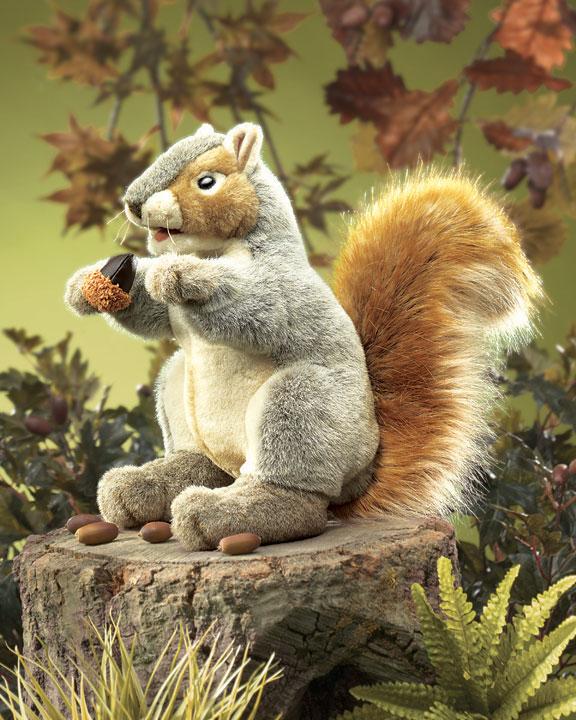 Squirrel, Gray