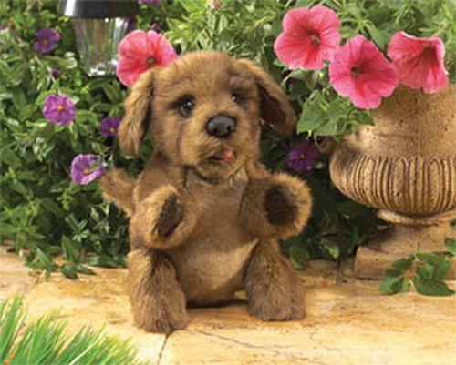 Brown Puppy Dog